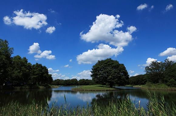 昭和記念公園水鳥の池@立川
