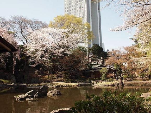桜@神池庭園