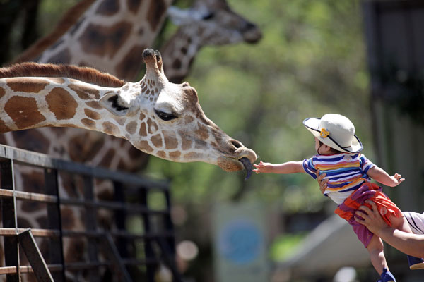 多摩動物園 えさ