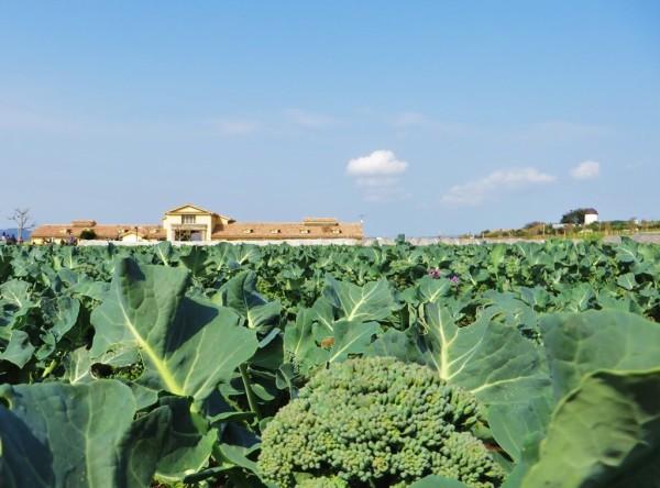 ソレイユ 彩り農園