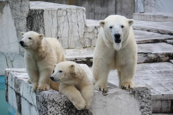 札幌円山動物園@札幌
