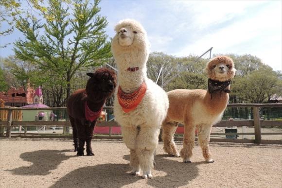 ふれあい動物園@那須りんどう